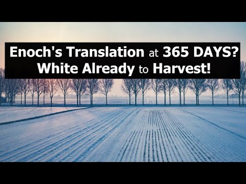 Enoch's Translation at 365 DAYS? White Already to Harvest!