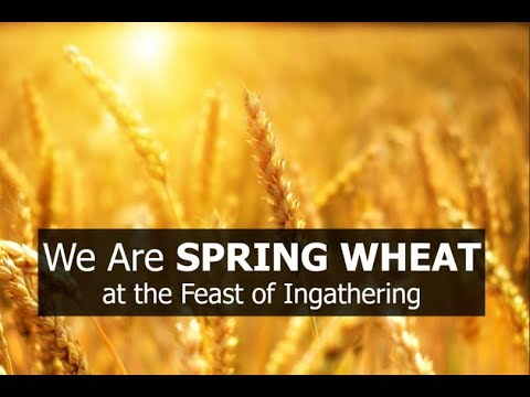 We Are SPRING WHEAT! at the Ingathering Feast